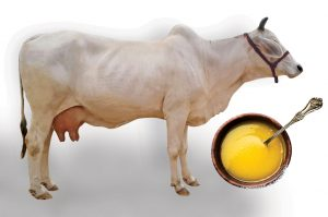 organic-india-pure-cow-ghee