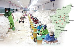 Cotton-tamil1
