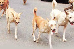 street-dogs-n