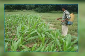 food-and-farm