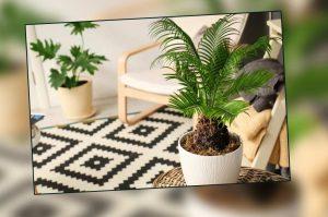 ecofriendly-home-decor